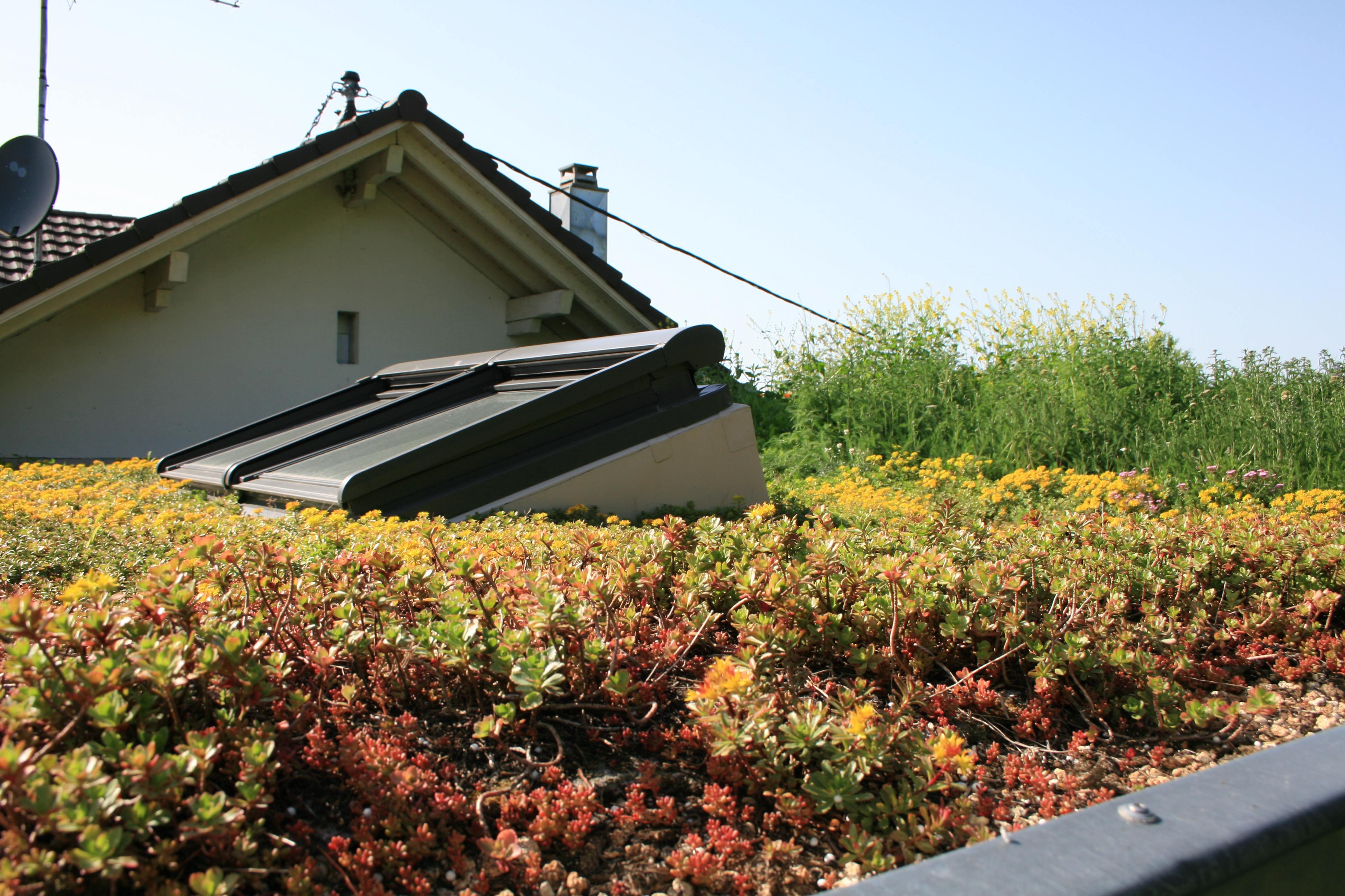 maison toit vegetal with maison toit vegetal amazing with maison toit vegetal free maison. Black Bedroom Furniture Sets. Home Design Ideas